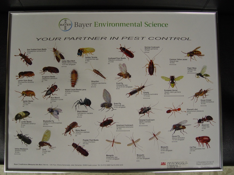 蛾蚋_白蟻除蟲價格|台北消毒|台北除蟲|消毒公司|各種木材害蟲防治 ...